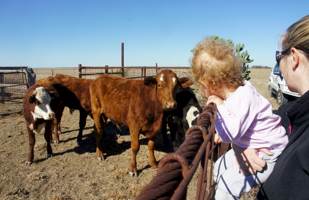 Elliana and cows 1