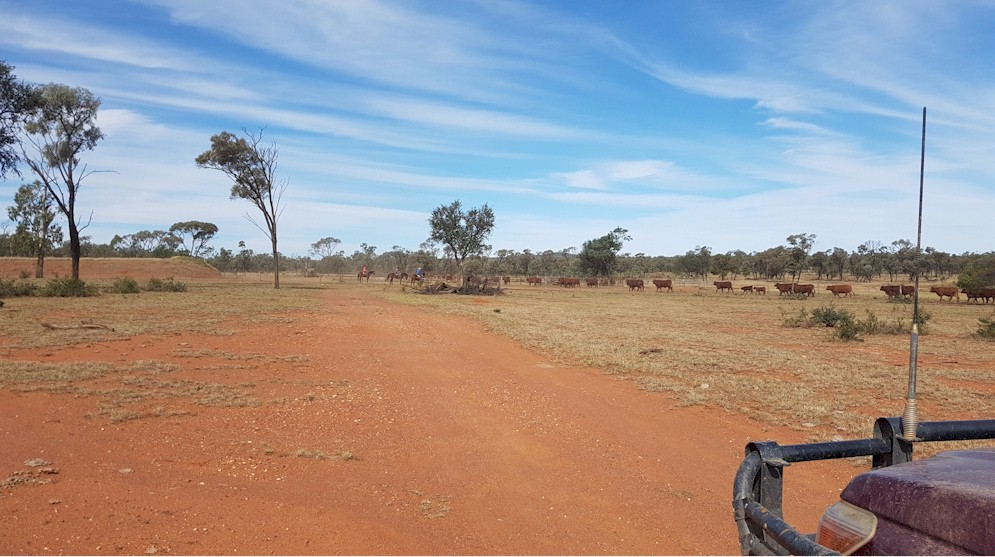 Arrival At Cattle Yards